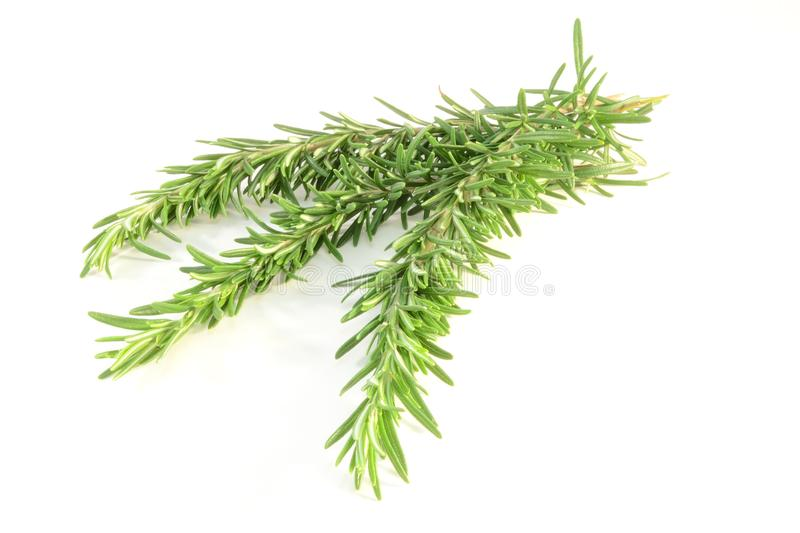 Rosemary photos stock