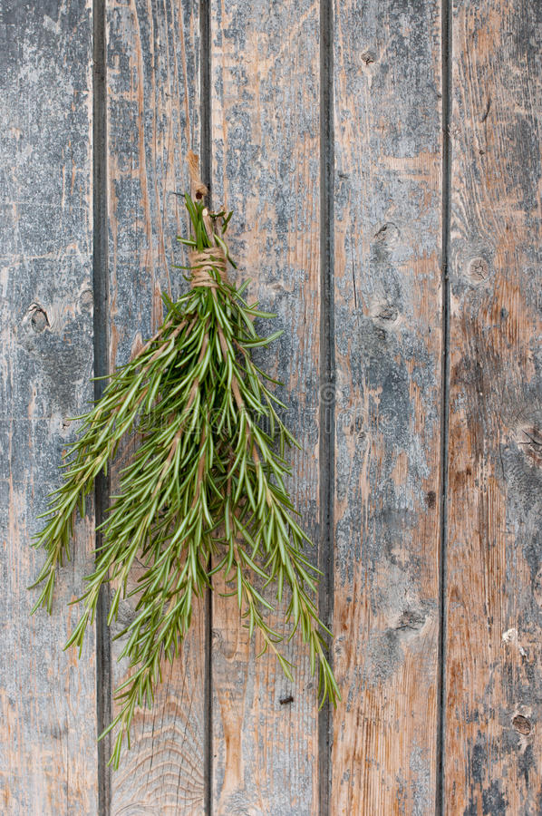 Download Rosemary stock photo. Image of rose, organic, plant, food - 26555318