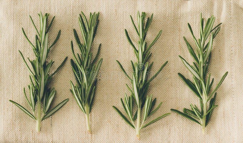 Download Rosemary stock photo. Image of vibrant, rosemary, fresh - 27647818