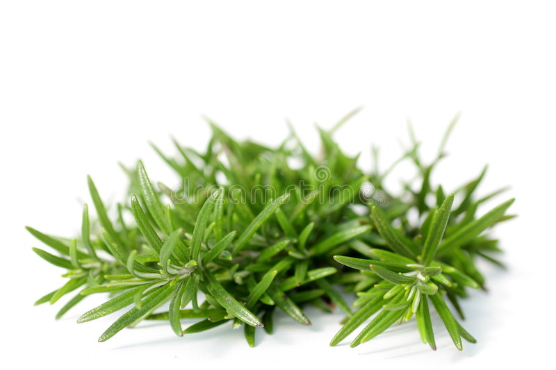 Rosemary stock images