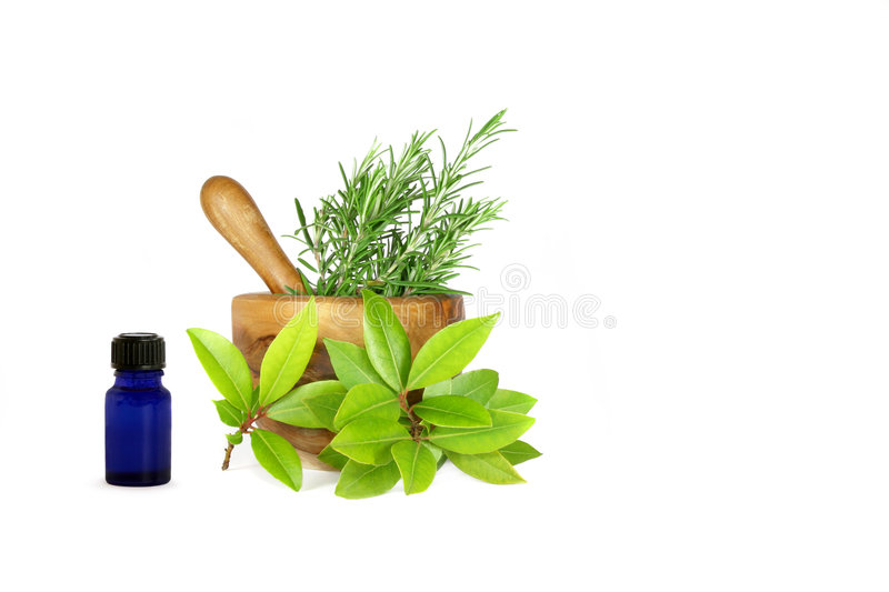 Download Rosemary And Bay Leaf Herbs Stock Photo - Image of culinary, edible: 6671290
