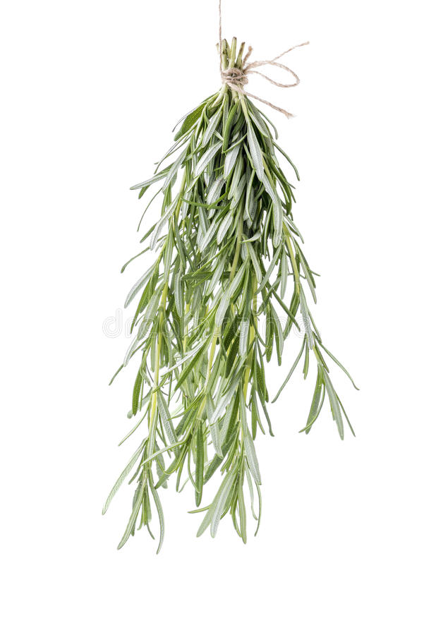 Rosemary bouchet hanged for drying. Rosemary bouquet hanged for drying isolated over white stock image