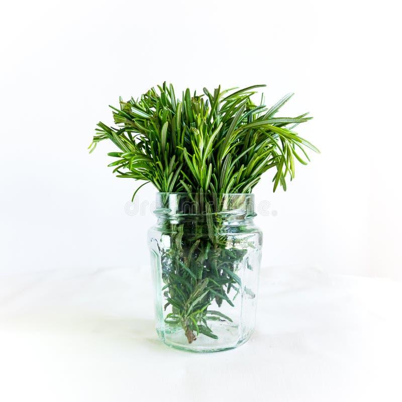 Rosemary dans un verre sur le fond blanc Herbes saines fraîches Mod?le et fond de nature image libre de droits