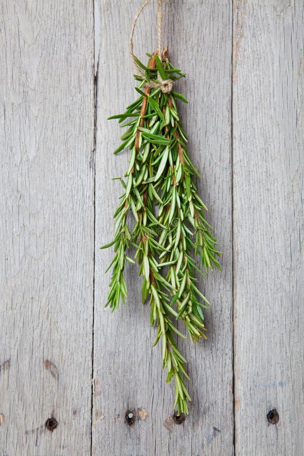 Download Rosemary Drying stock photo. Image of bunch, fresh, nature - 28474768