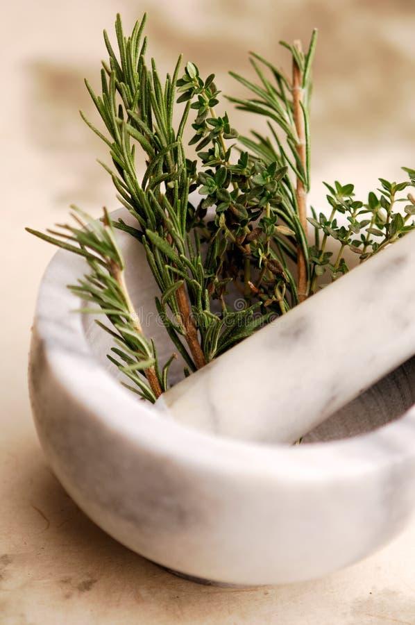 Rosemary et herbes photo libre de droits