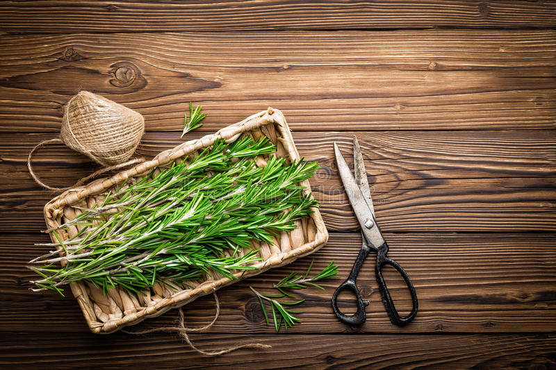 Rosemary. Fresh rosemary herbs on a wooden table stock image