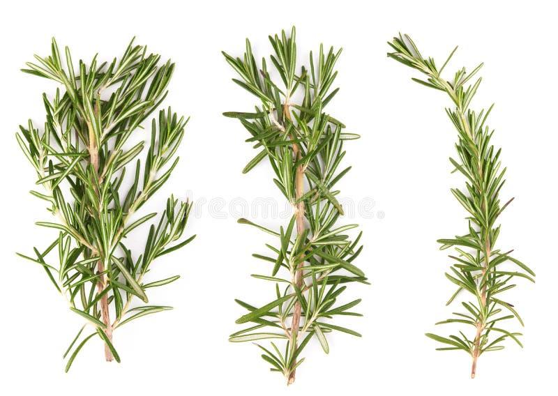 Rosemary. Fresh rosemary sprig isolated on white background stock photography