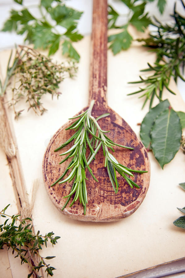 Download Rosemary herb stock image. Image of leaf, cuisine, culinary - 27982153