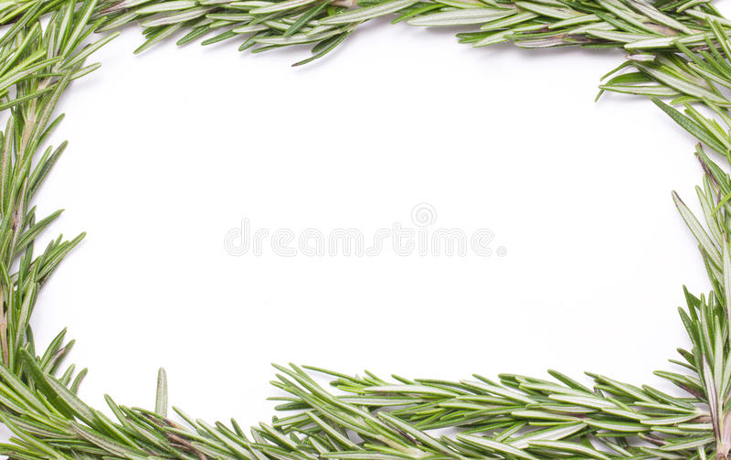 Rosemary Herbal Frame. fotografia stock