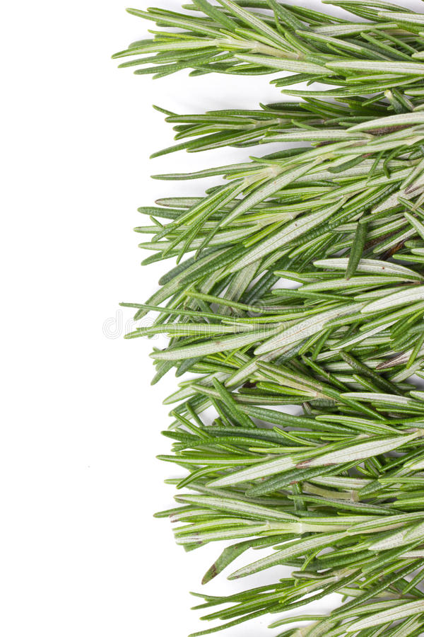 Rosemary Herbal Frame. immagine stock libera da diritti