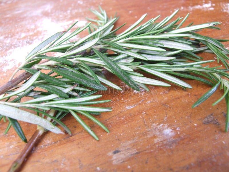 Rosemary I imágenes de archivo libres de regalías