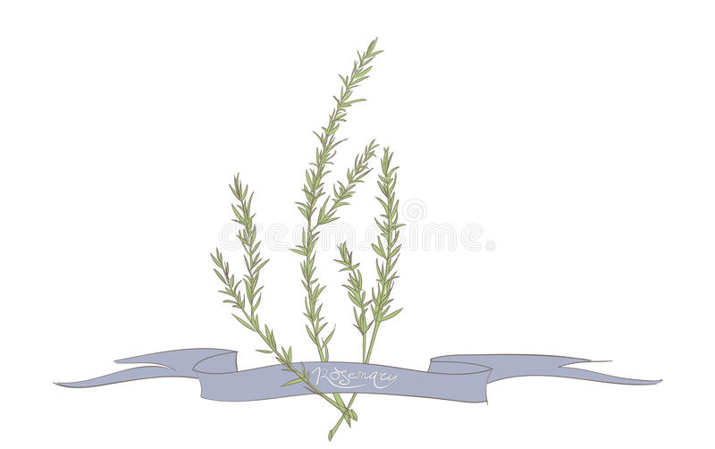 Rosemary illustratie stock illustratie
