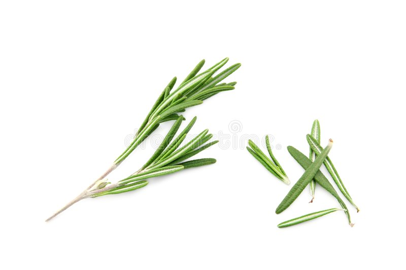 Rosemary isolated on white royalty free stock photography