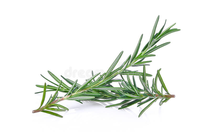 Rosemary isolated on white stock photos