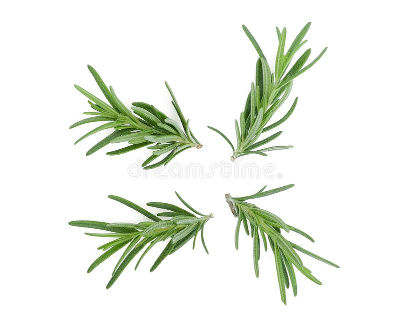 Rosemary isolated on white stock images