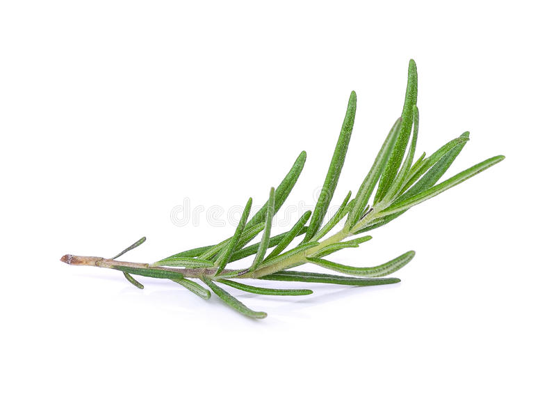 Rosemary isolated on white stock photo