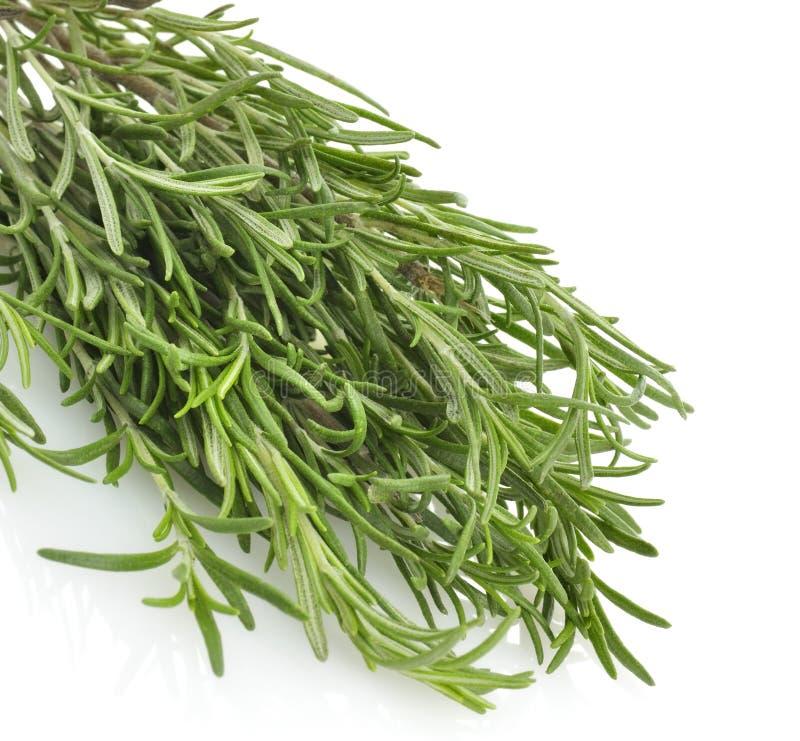 Rosemary-Kraut stockbild