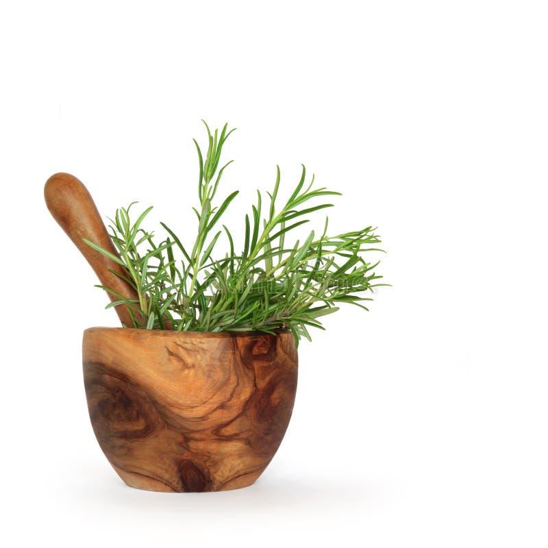 Rosemary-Kraut-Blätter stockfotografie