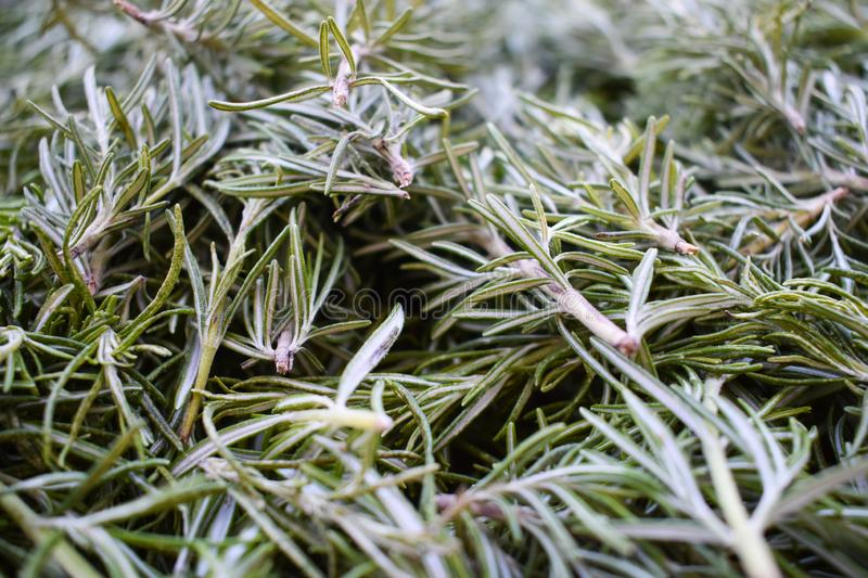 Rosemary, natural and healthy food royalty free stock photos