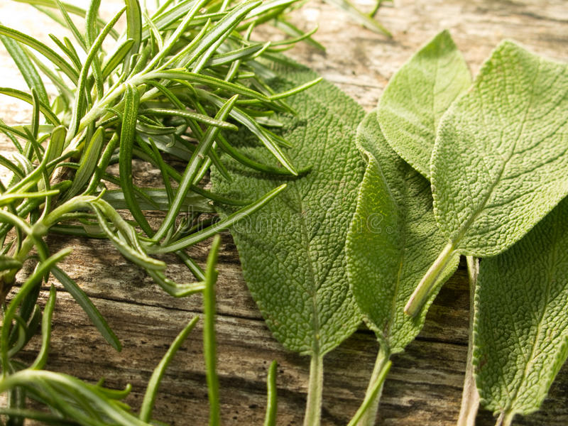 Rosemary and sage stock photos