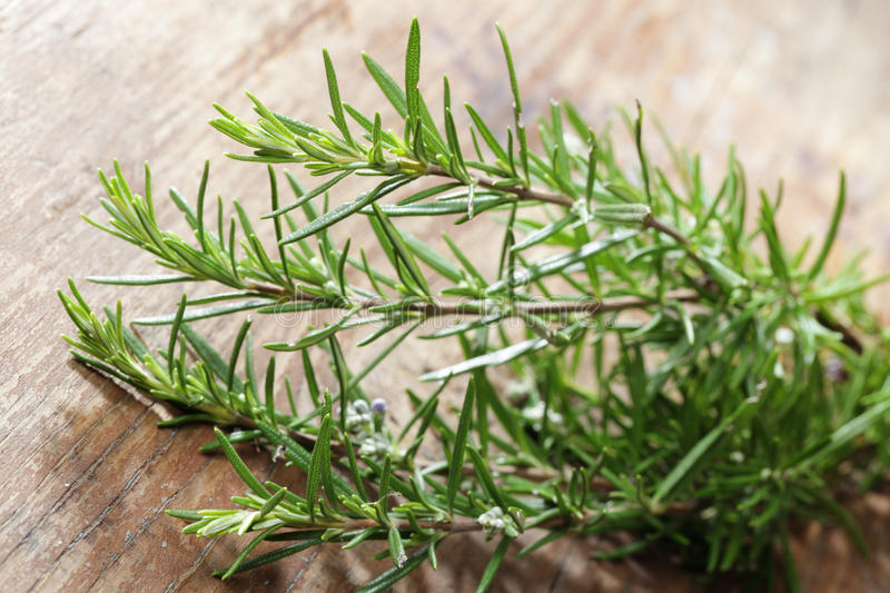 Download Rosemary. Shallow DOF stock image. Image of object, rosemary - 12752791