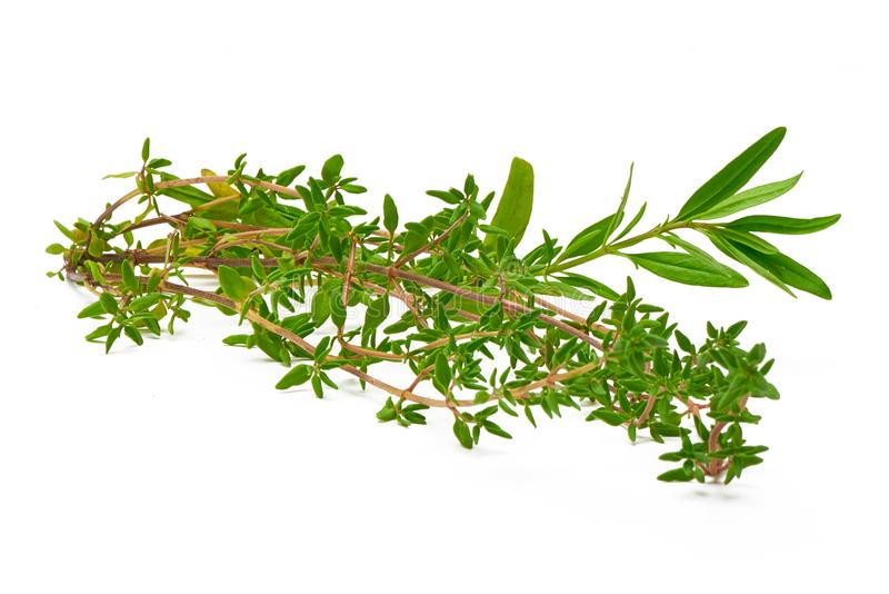Rosemary, Thyme, fresh herbs isolated on white background royalty free stock photos