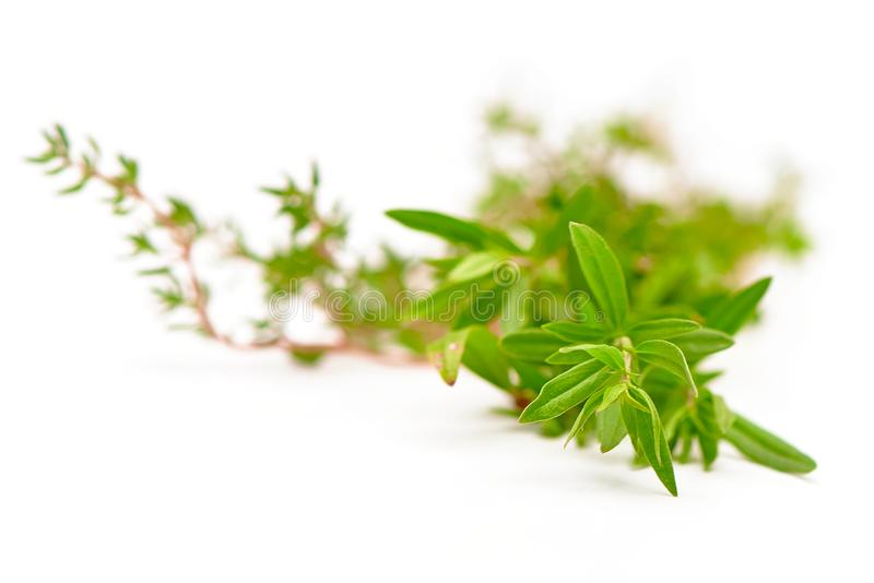 Rosemary, Thyme, fresh herbs isolated on white with blurred background royalty free stock photos