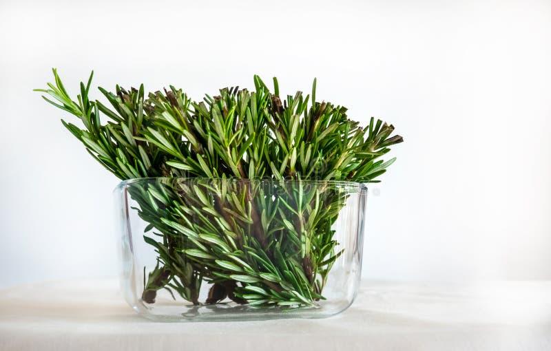 Rosemary Twigs in een Glaspot op Witte Achtergrond Gebruikt zoals Kokend Kruid en voor Geneeskundedoeleinden stock foto
