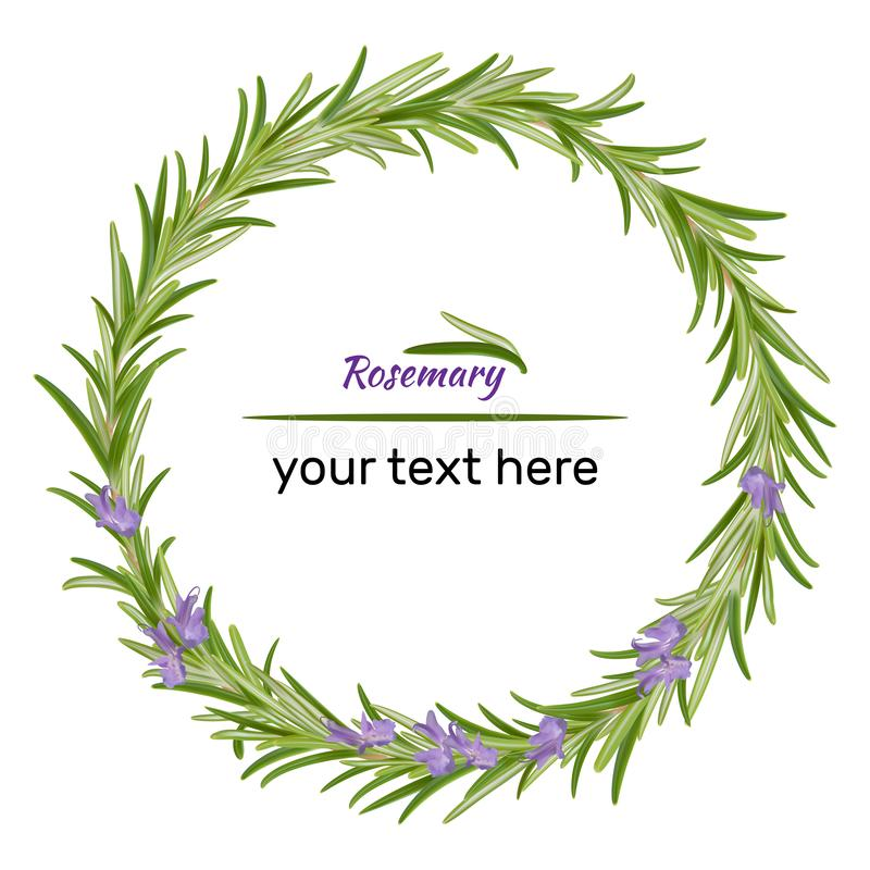 Wreath of rosemary branches. Vector illustration of herbs. Perfect for card, packaging, menu design. Vector illustration stock illustration
