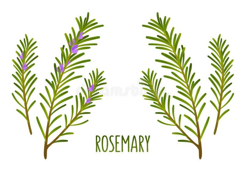 Rosemary-Zweige vektor abbildung