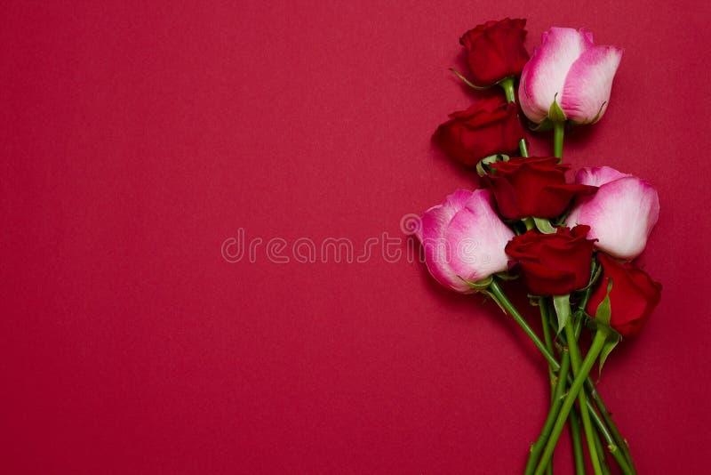 Rosen auf dem roten Hintergrund lokalisiert Draufsicht und Spott oben Mutter und Valentinstag Frauenfeiertage Tapete und romantis lizenzfreie stockfotos
