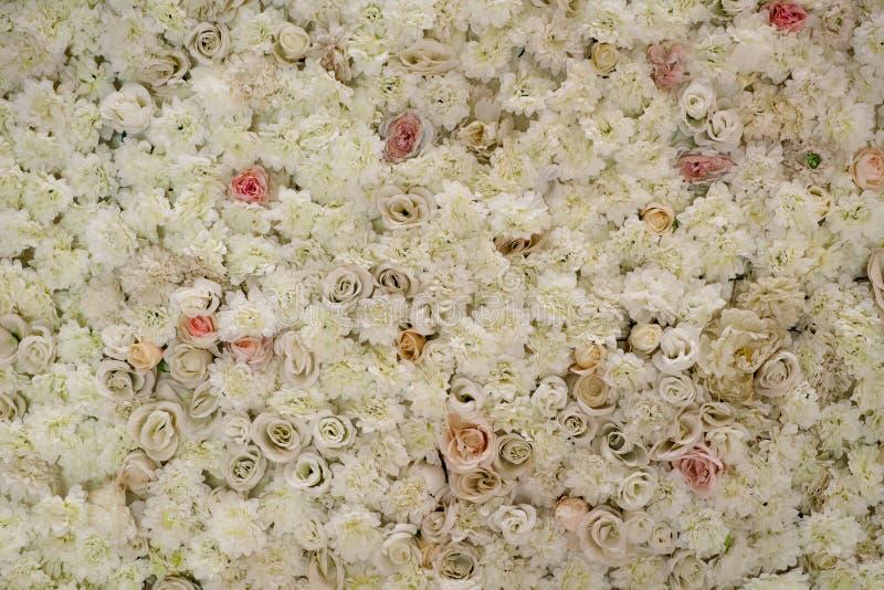 Rosen auf der Wand lizenzfreie stockbilder