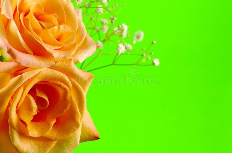 Rosen auf Grün lizenzfreie stockbilder