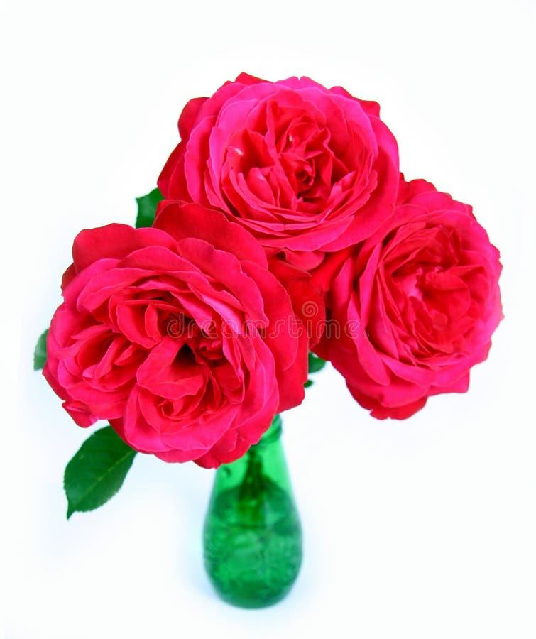 Rosen auf Weiß. lizenzfreies stockbild