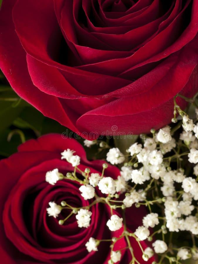 Rosen-Blüten-Detail Lizenzfreie Stockfotografie