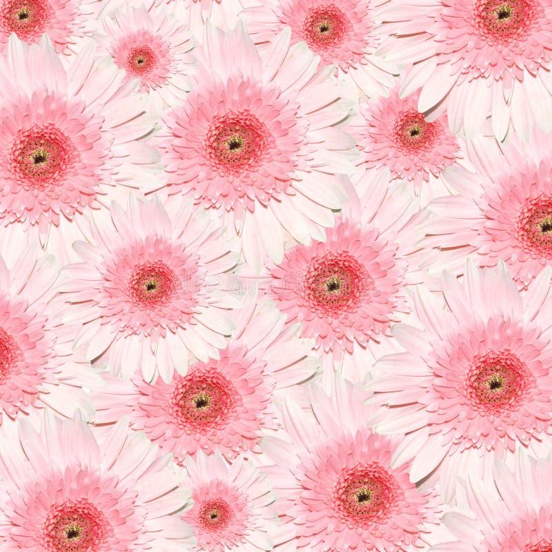 Rosen-Blumen lizenzfreie stockbilder