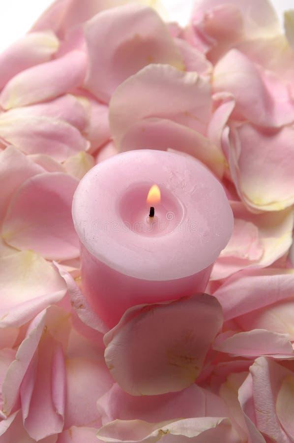 Rosen-Blumenblätter stockbilder