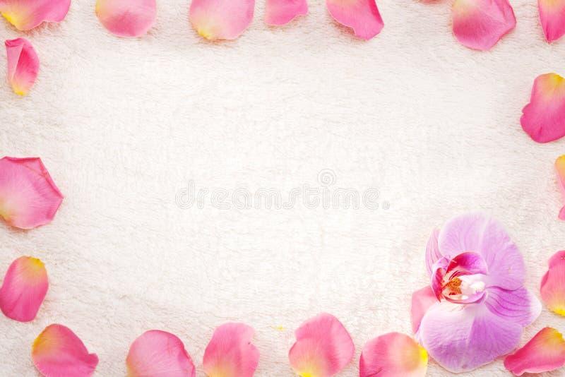 Rosen-Blumenblätter auf einem weißen Tuch. lizenzfreies stockfoto