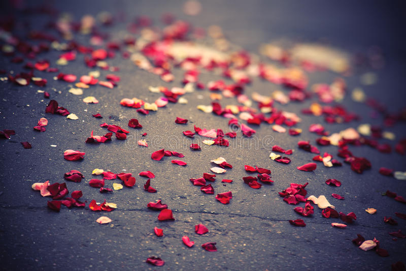 Rosen-Blumenblätter auf einer Plasterung stockfotos