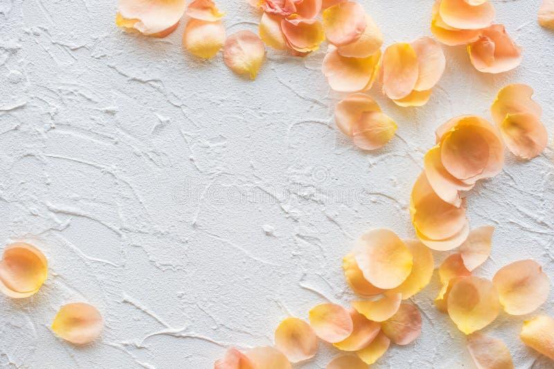 Rosen-Blumenblätter auf weißem strukturiertem Hintergrund lizenzfreies stockbild