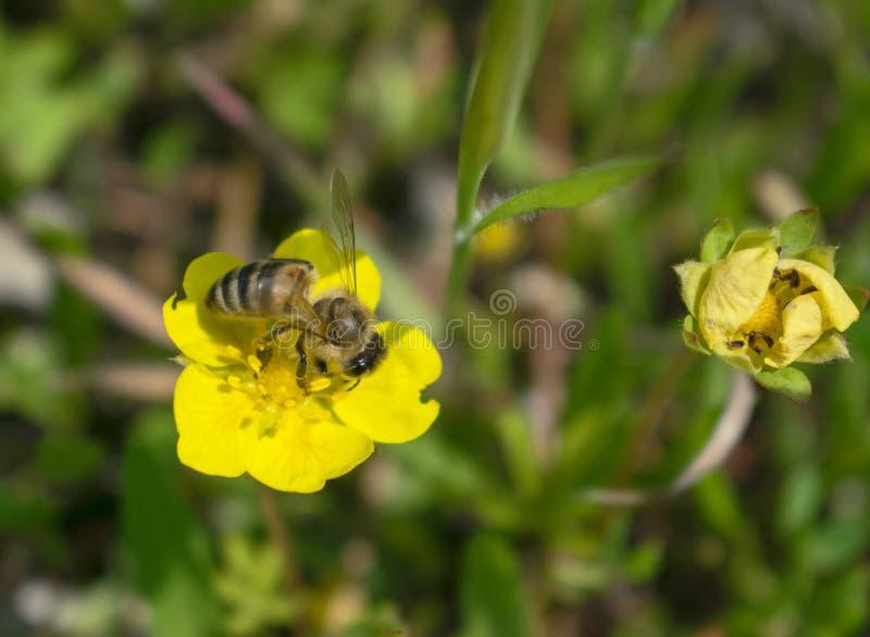 Rosen-Blumenblätter eine schöne natürliche Dekoration lizenzfreies stockfoto