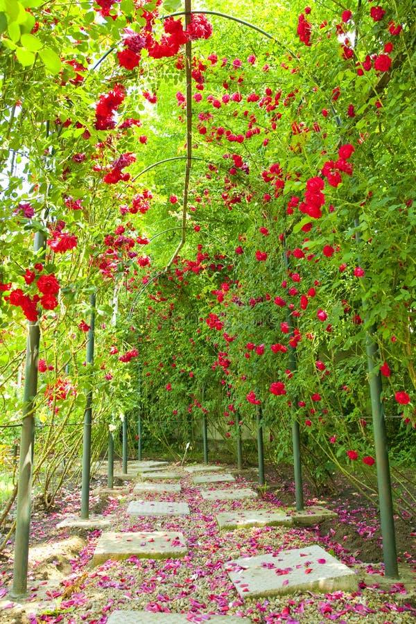 Rosen-Bogen in einem Garten lizenzfreies stockfoto