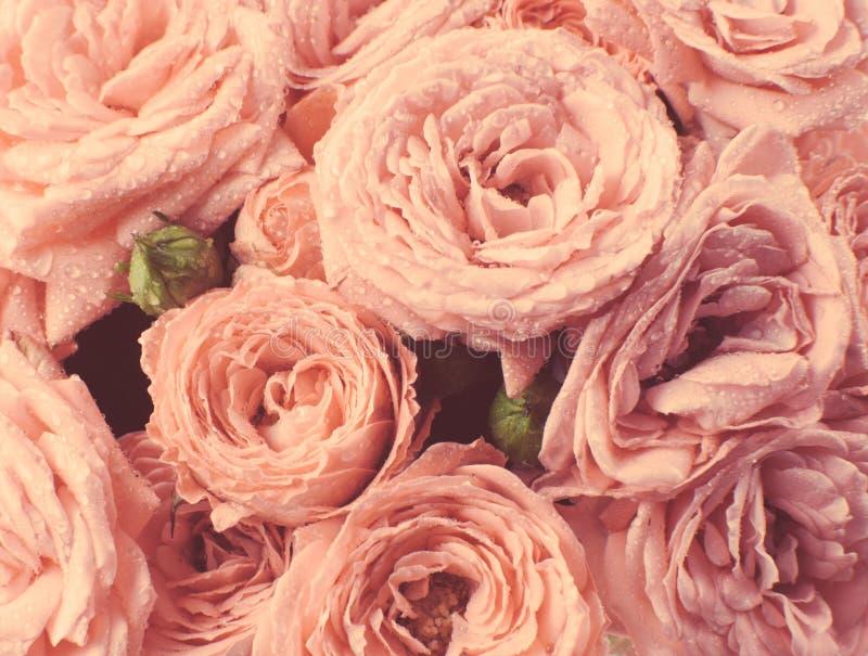Rosen in der Weinleseart, verblaßte Farben lizenzfreies stockbild