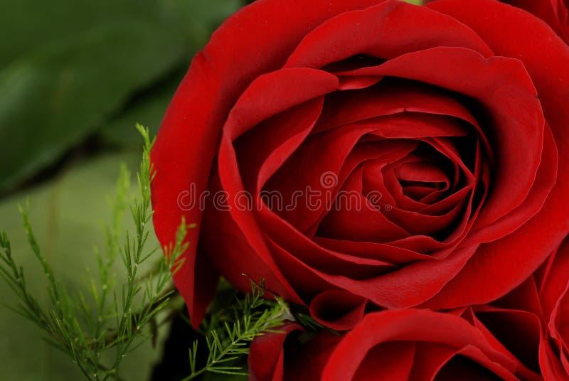 Rosen in einem Boquet für Liebes-Hochzeit oder Geschenk stockfoto