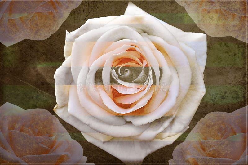 Rosen eines schöne Schmutzrosas vektor abbildung