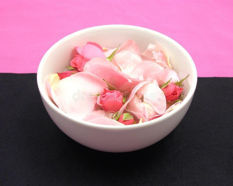 Rosen-Knospen und Blumenblätter stockfotos