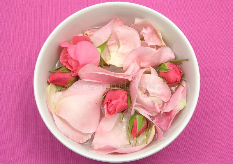 Rosen-Knospen und Blumenblätter stockbild