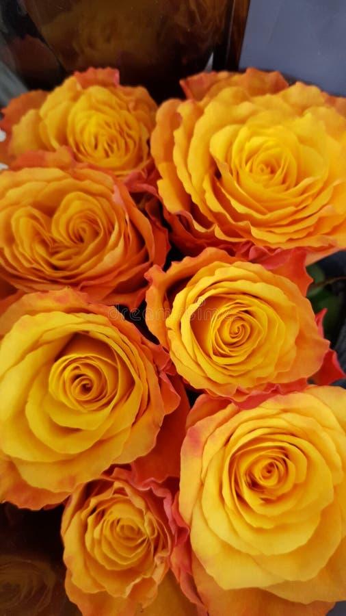 Rosen orange lizenzfreie stockfotografie