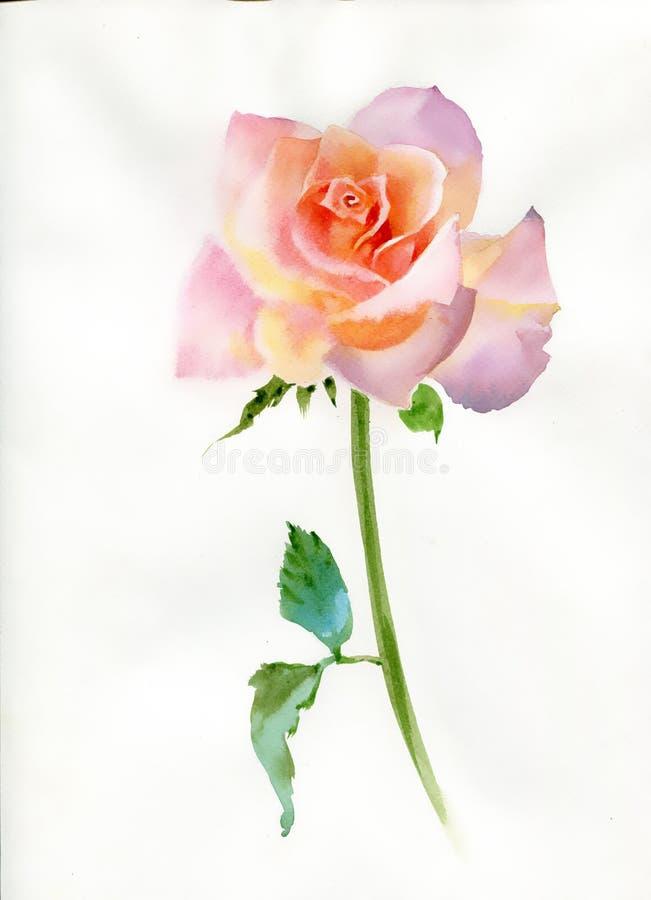 Rosen-Rosa. Aquarell-Malerei stock abbildung