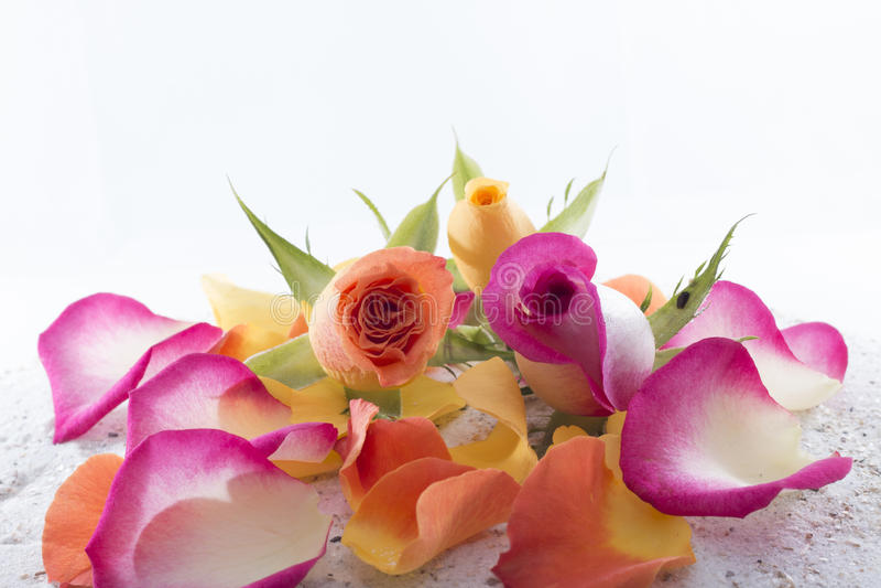 Rosen und Blumenblätter stockfotografie